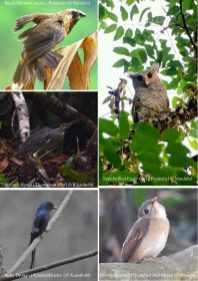 Birds of Thodupuzha [Vol 1, July 2018]-38
