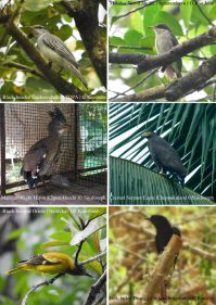 Birds of Thodupuzha [Vol 1, July 2018]-41