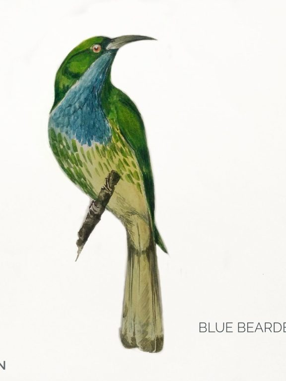 #9- Blue-bearded Bee-eater