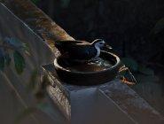 Agitha TG BirdBath 2