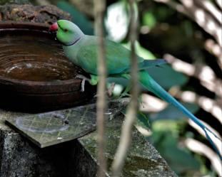 Agitha TG BirdBath 3