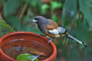 Agitha TG BirdBath 4