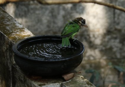 Agitha TG BirdBath 8