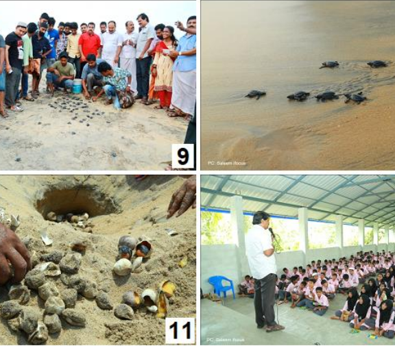Conservation activities carried out on olive ridley turtles and observations on its hatching from Chavakkad beach, Kerala, India