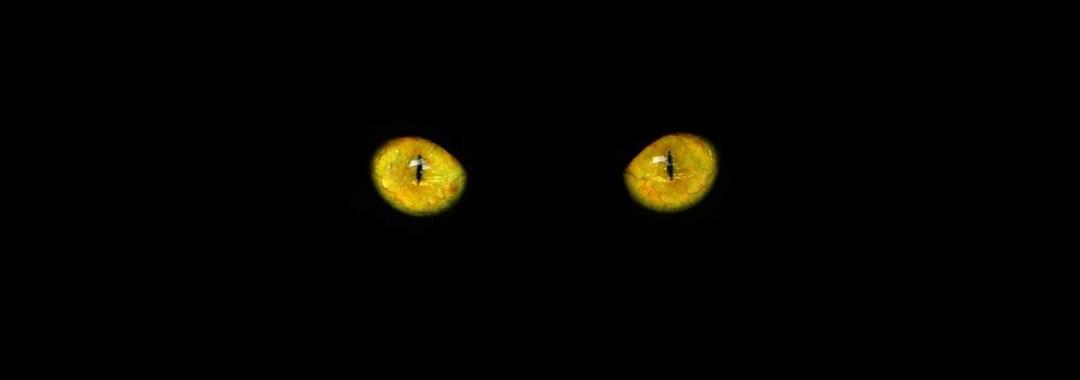 Motivlinsen - farbige Kontaktlinsen