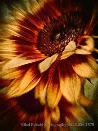 Fine art print store Impressionist Sunflowers 1