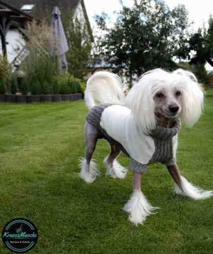 Hundepullover stricken soft Pearl