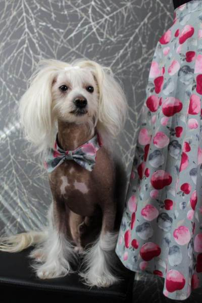 chinese crested dog mit fliege passend im partnerlook zum tellerrock aus tuttifrutti stoff von mezfabrics