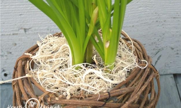 Hogyan varázsolj asztaldísz dekorációt  a cserepes növényedből?