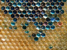 blue-honeycomb