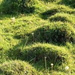 Mole Hills Matter