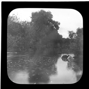 Photo courtesy of the State Library of South Australia http://collections.slsa.sa.gov.au/resource/B+64126 River Torrens at Felixstow