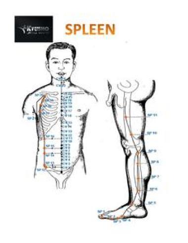 Pressure Point Spleen 6 - Triple Yin