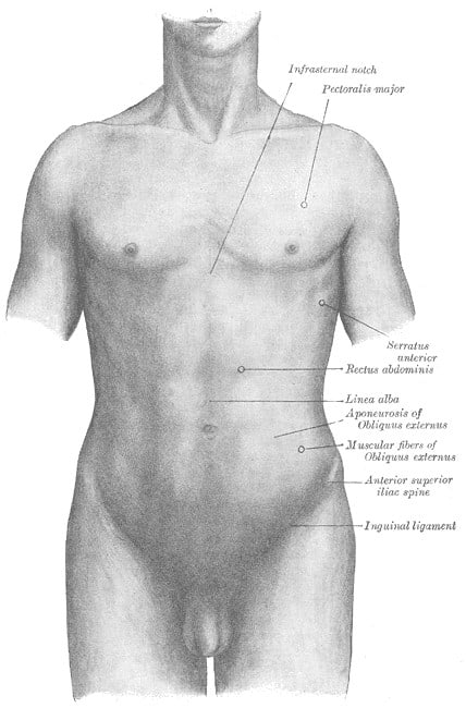 * Pressure Points Inguinal Crease