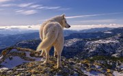 Wolves and Warriors - Finding Truth in an time of Lies and Corruption