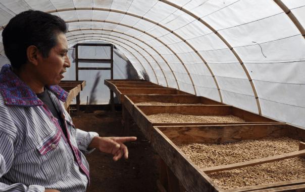 Guatemala-CafeImports-Imgs7