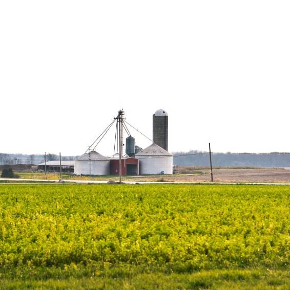 dairy-farm-18