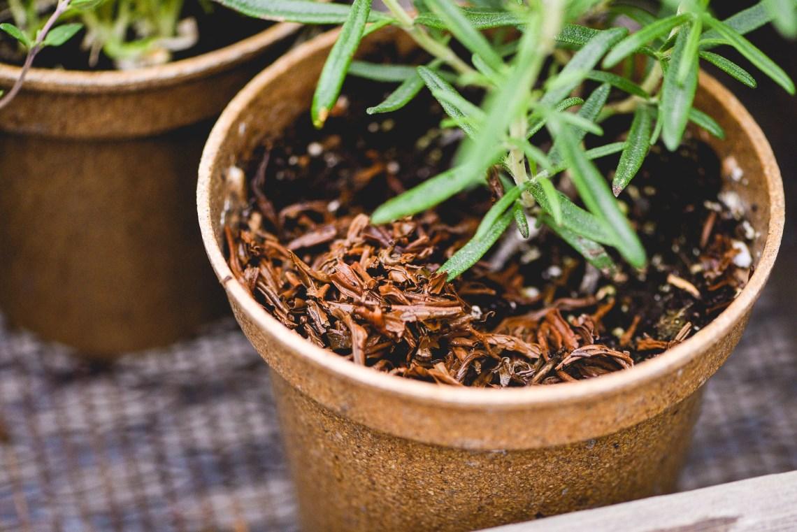 Tea-Garden-Blog-7