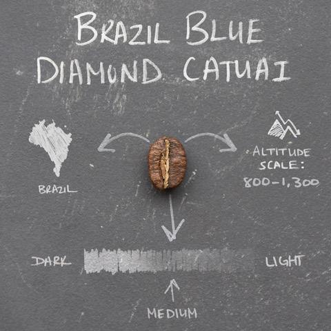Bean_Variety_Infographics_0002_Brazil Blue Diamond Catuai
