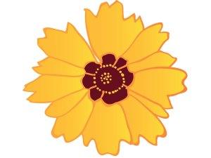 fleur_04-27_coreopsis