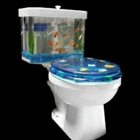 toilette-aquarium