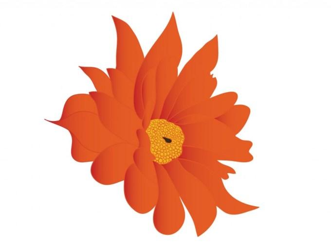 chrysantheme-nez-odeur