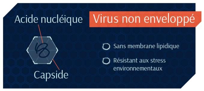 Virus-non-enveloppé -Empêcher que ça ne devienne viral…