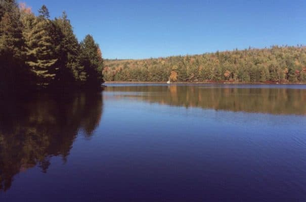 Experience the Best of Maine: Dutton Pond Forest