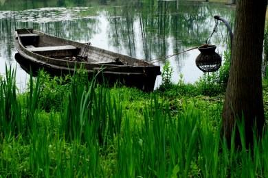 wetlands-1551833_1920.jpg