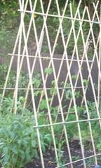 A frame bamboo bean growing structure
