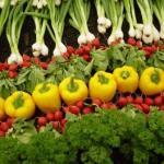 Wally Richards:  the wonderful raised garden