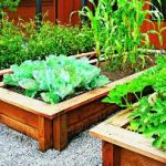 High vegetable prices create spike in 'grow your own' trend