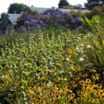 Design Trends - New Perennial Planting by Nick Robinson