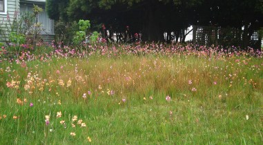A plea for flowers in the long grass