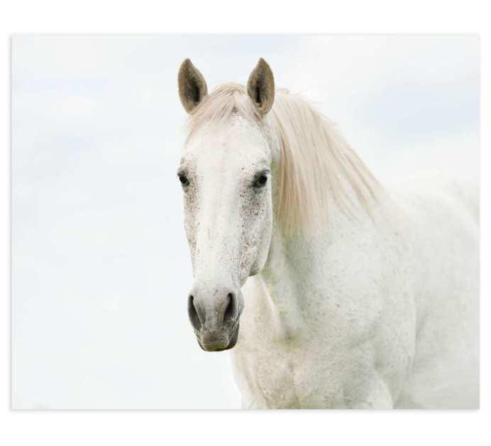 Lienzo fotoimpreso caballo blanco