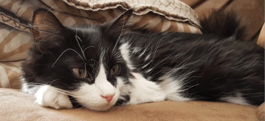 pet-agreement-kitten