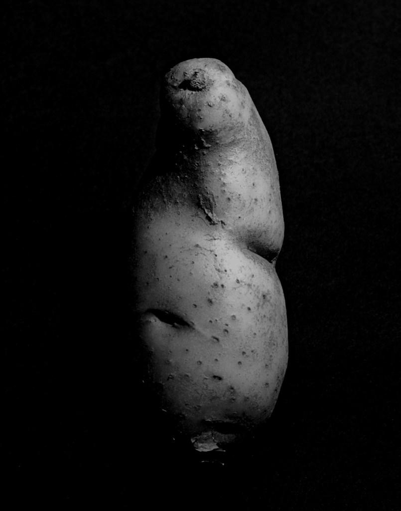 Potato, 1981