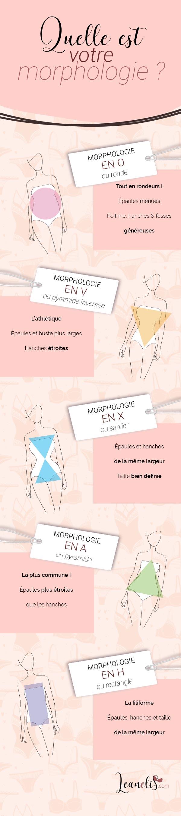Les différents types de morphologie