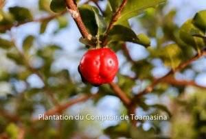 Les Superfruits en Poudre