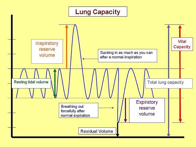 Respiratory Physiology: Airways, Lung Volume, Pulmonary ...