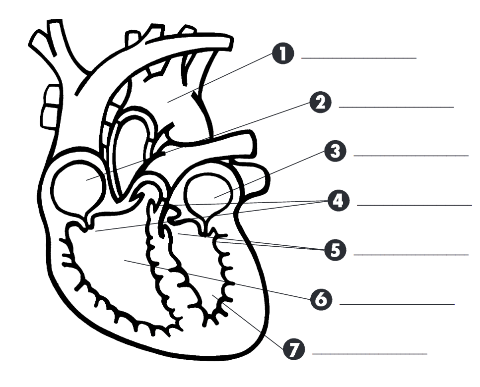 STEM Connections and the Human Heart: Tiny Stitches