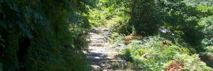 Hiking in Lefkada: Discover the ferry tale forests of Lefkada!