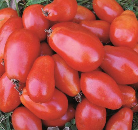 Find Martino's Roma Tomatoes and other heirloom varieties at Lehmans.com.