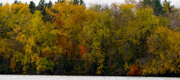 Trees on Olentangy River