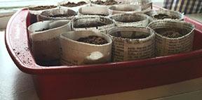 pots in window
