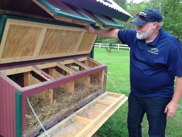 Mike shows how the nest boxes are easy to get to for egg gathering and cleaning.
