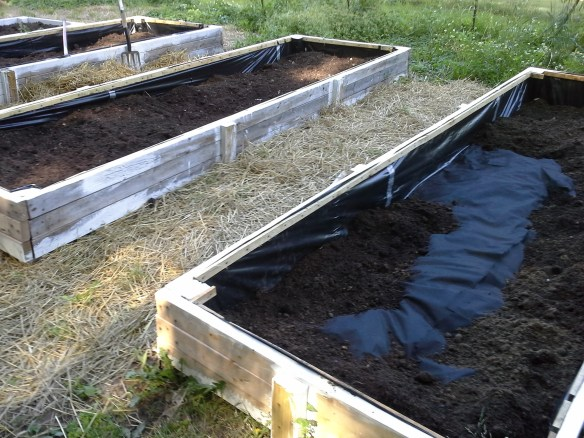 Tim's new raised beds! If DIY isn't for you, consider Lehman's Space Saver Garden Beds.