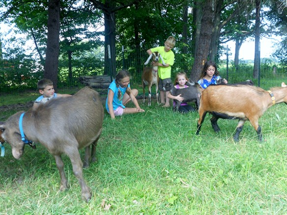Amish Country Farm Grows Goats, Guinea Hogs and Great Family