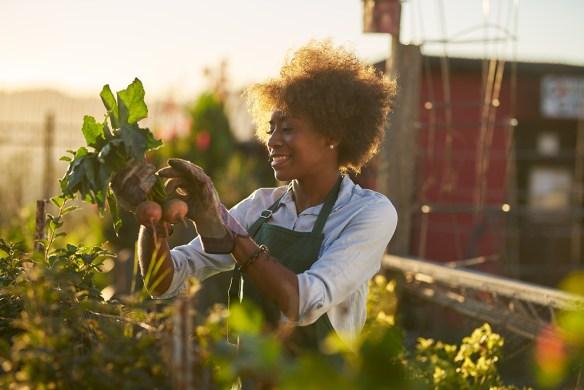 gardener with beets