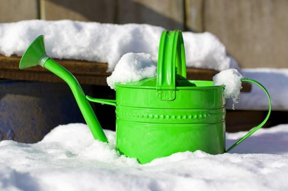 gardening in snow